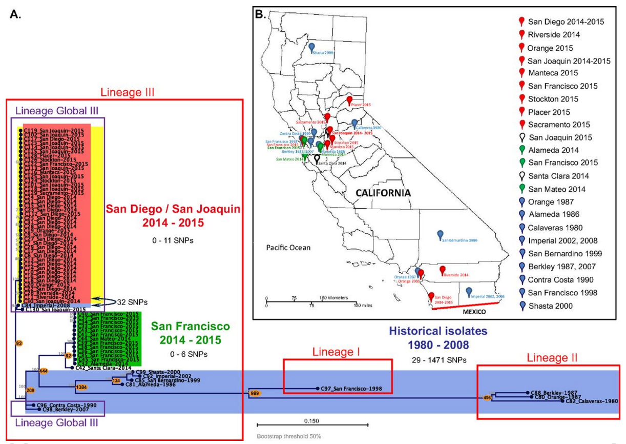 Local and global phylogeny of CA genome-wide hqSNP differences between STX1-producing S. sonnei isolates from the San Diego and San Joaquin outbreak, STX-negative S. sonnei isolates from the San Francisco outbreak, and historical isolates from California. Isolates from the San Diego/San Joaquin (SDi/SJo) outbreak (red), isolates from the San Francisco (SFr) outbreak (green), historical isolates (blue), and STX-positive isolates (yellow) are indicated by background colors. / Credit: mSphere Kozyreva et al 2016
